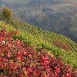 Colline d'autunno